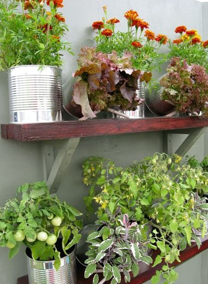 Food cans growing flowers and salads.