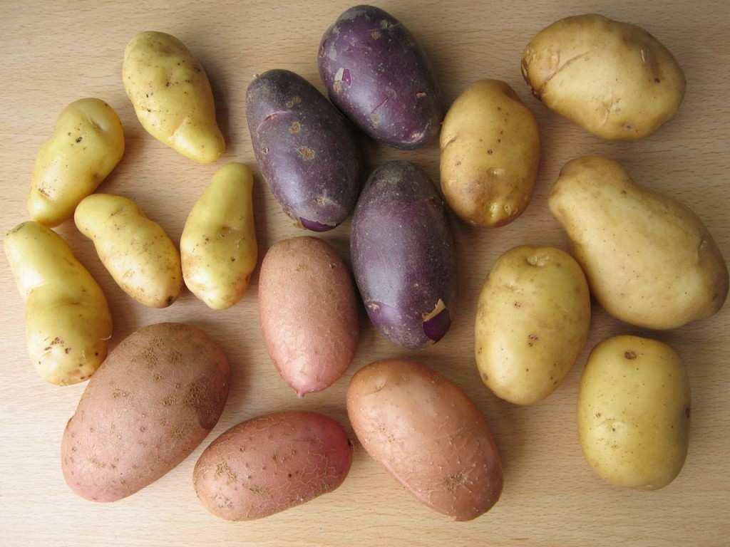 The new Sárpo blight-resistant 'supaspuds', clockwise from top left: 'Kifli', with creamy, elongated tubers, dark-skinned 'Blue Danube', white-skinned 'Sárpo Shona' and pink 'Sárpo Una'.