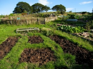Community organic allotments at Moelyci Environmental Centre, Tregarth, Gwynedd, North Wales.