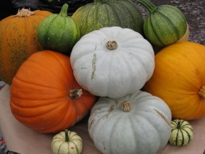 Pumpkins and winter squash from the allotment.