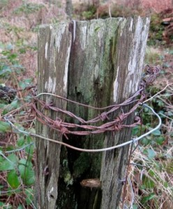Barbed wire fencing - soon to be a kitchen garden must-have?