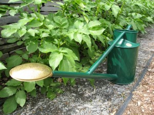 A watering can is a simple and efficient way of watering garden plants without needing to get too 'high tech' about it.