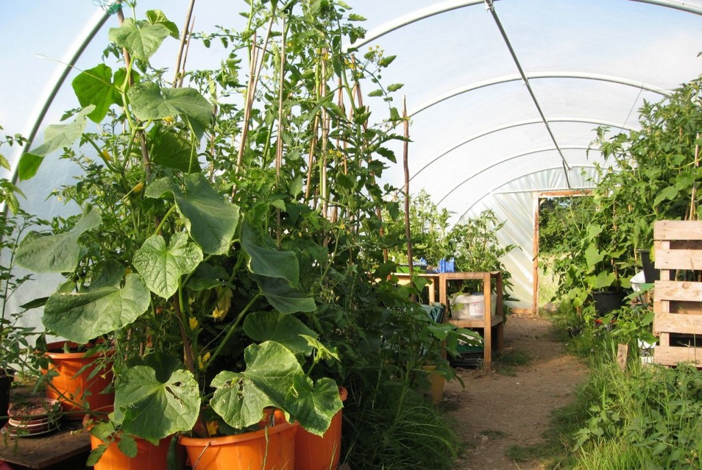 Polytunnels give all gardeners a growing advantage but we should not shy away from asking about how and where they have been made, by who, and what we could do with them when they come to the end of their life.
