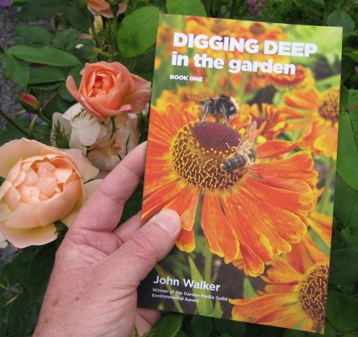 dd1-in-roses