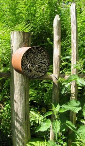 A home-made nesting box made from a tin can and hollow plant stems fixed to a sunny wooden fence near some perennial stinging nettles (Urtica dioica).
