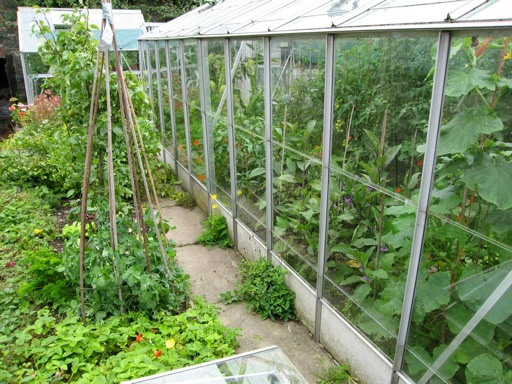 A preloved greenhouse restored to full working order and filled with food crops.