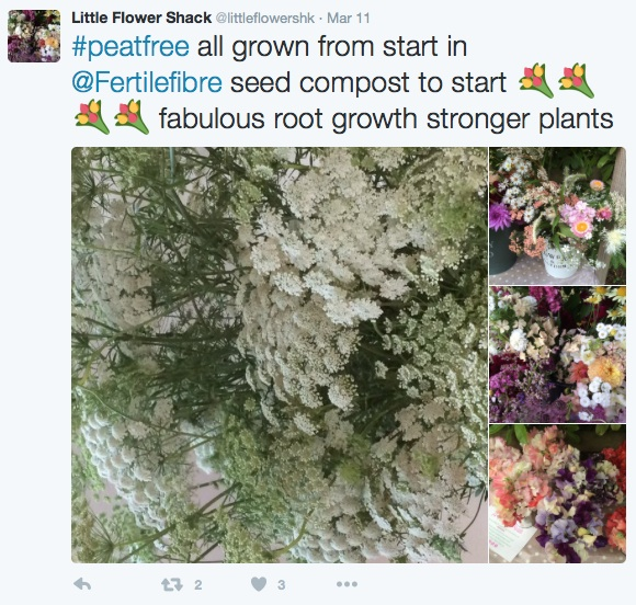little-flower-hashtag