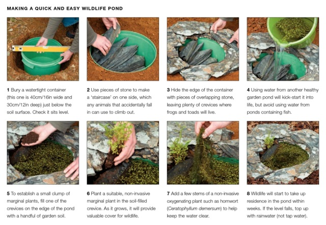 How to create an eco garden the practical guide to for Pond friendly plants