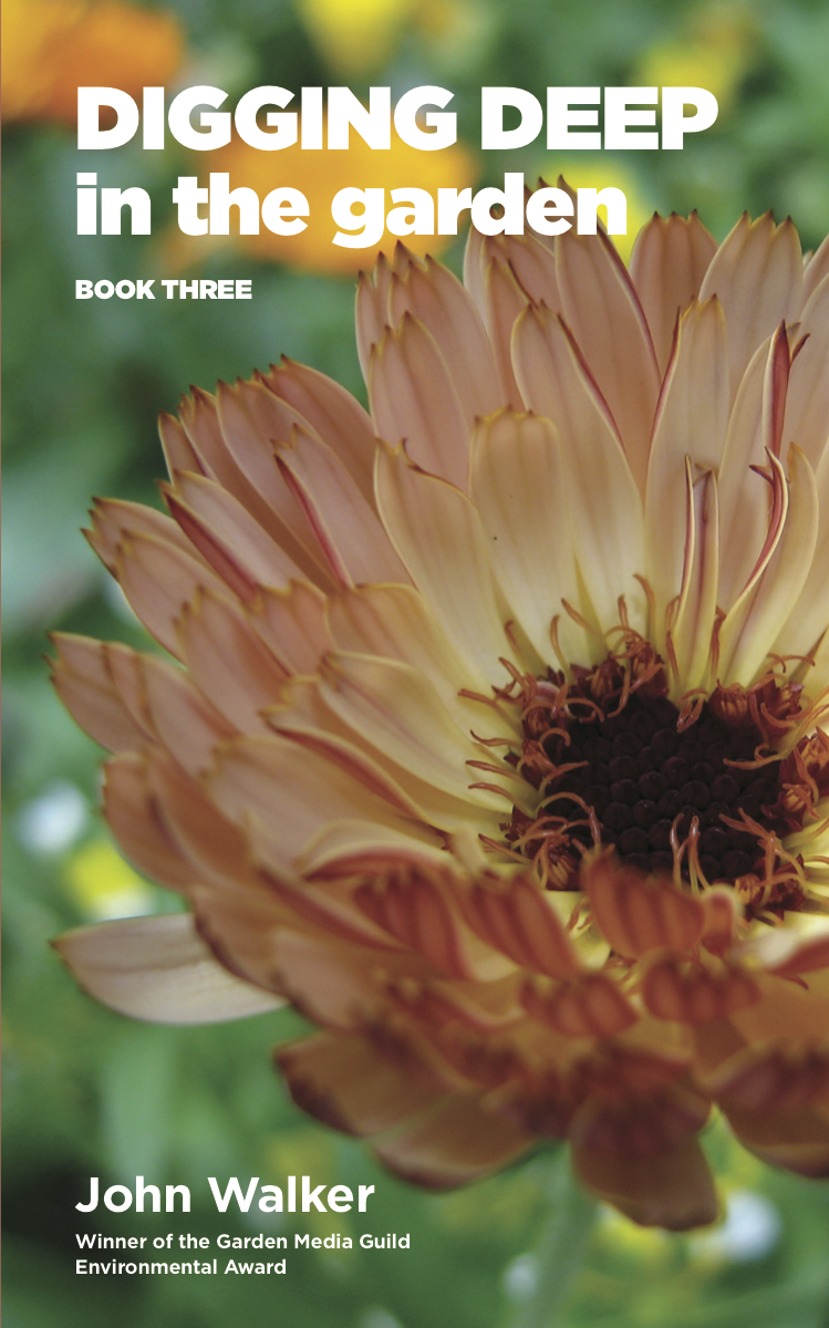 Calendula 'Sunset Buff' is stars on the cover of Digging Deep in the Garden: Book Three