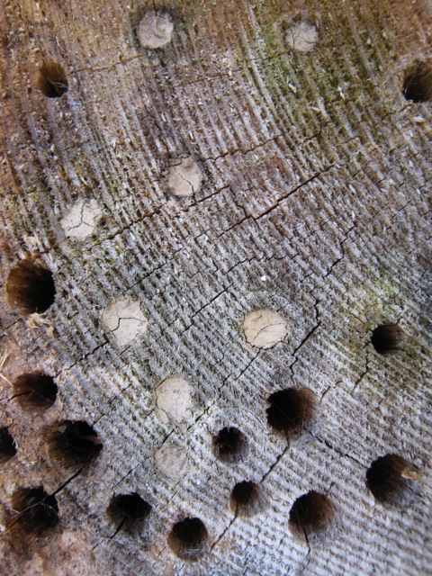 wooden-block-solitary-bees-wasps-wild-nest-occupied