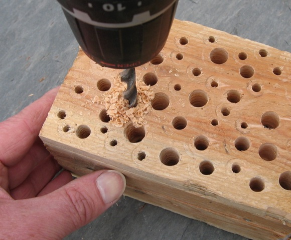 wooden-block-solitary-bees-wasps-wild-nest