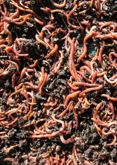 compost-worms-cool-compost-bin