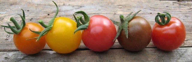 gardening-climate-change-ripening-tomatoes
